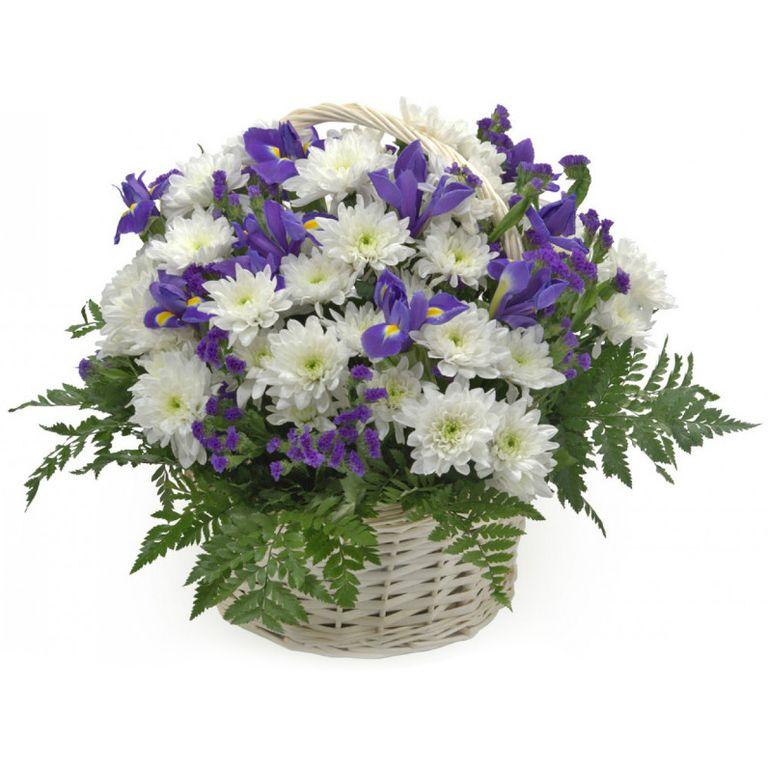 фото ирисов хризантемы что волокнистые прожилки